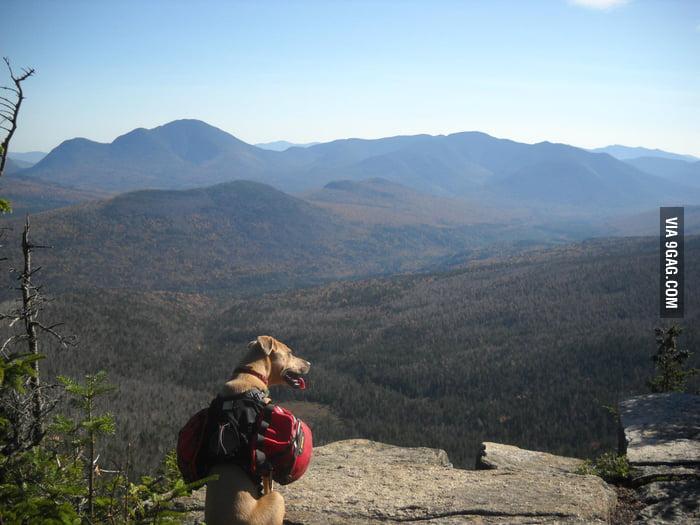Happy Mountain Dog