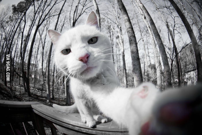 This cat is taking her selfy.