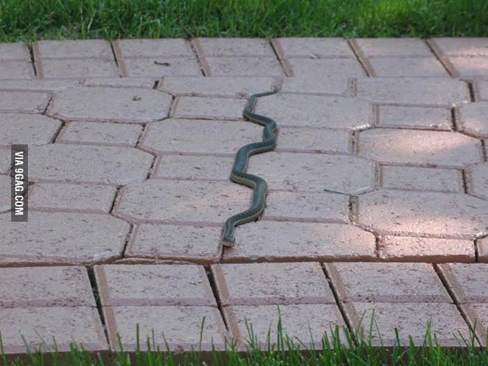 Real life snake.