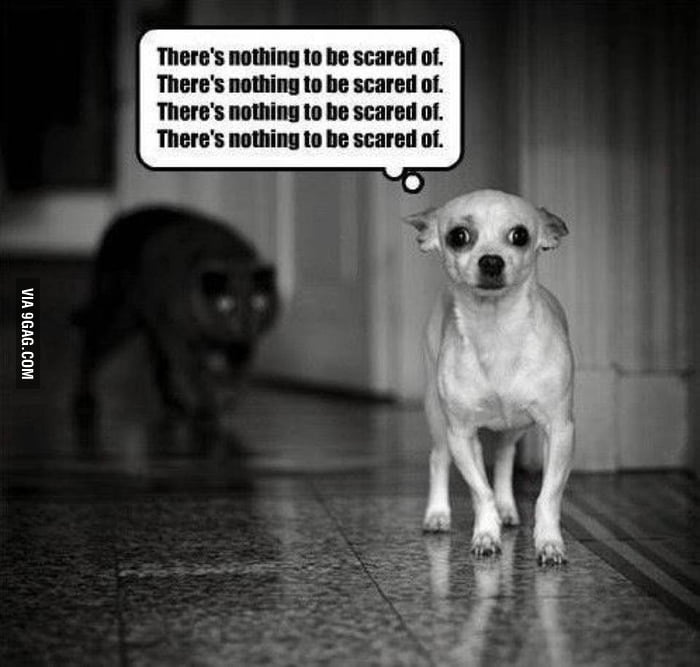 There's nothing to be scared of!