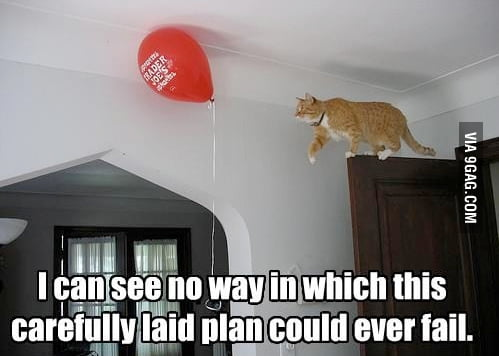 The cats law