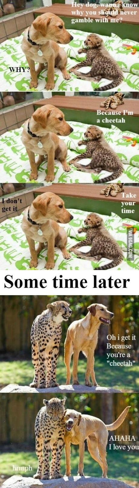 Slow poke dog don't get it