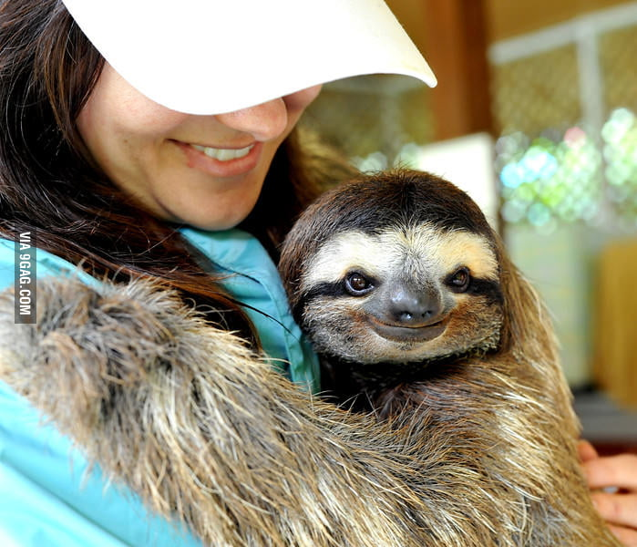 The sweetest sloth