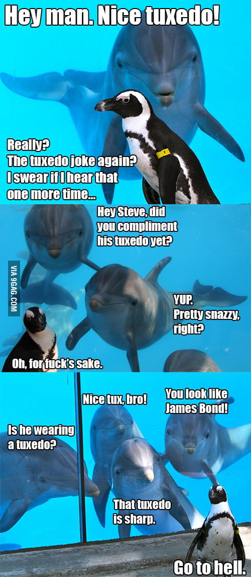 Dolphins Are Bad At Jokes 9gag