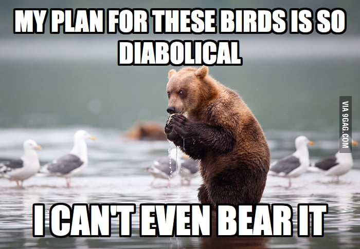 Evil Plotting Bear