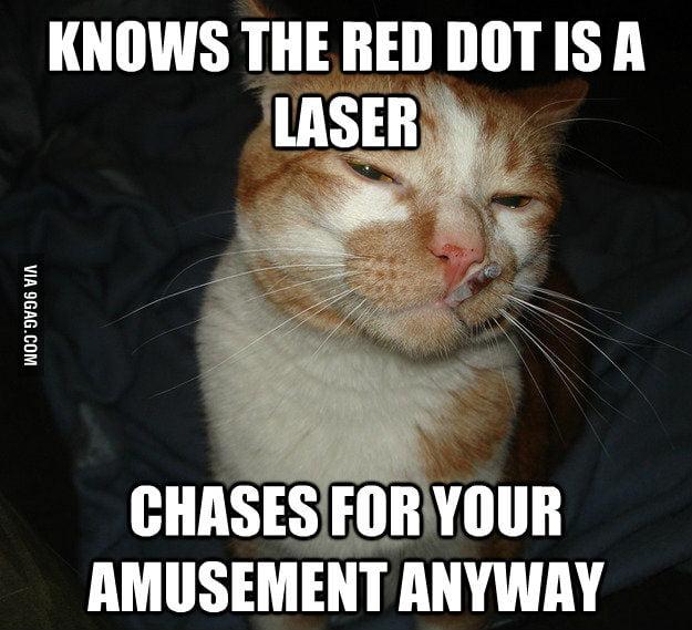 Good Guy Cat.