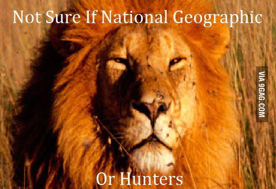 Not sure lion