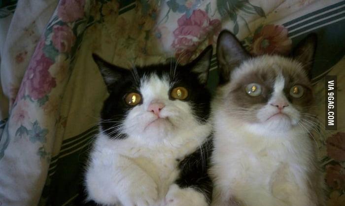 Grumpy Cat got a brother.