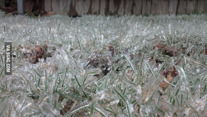 Rainwater froze around the grass blades on a lawn.
