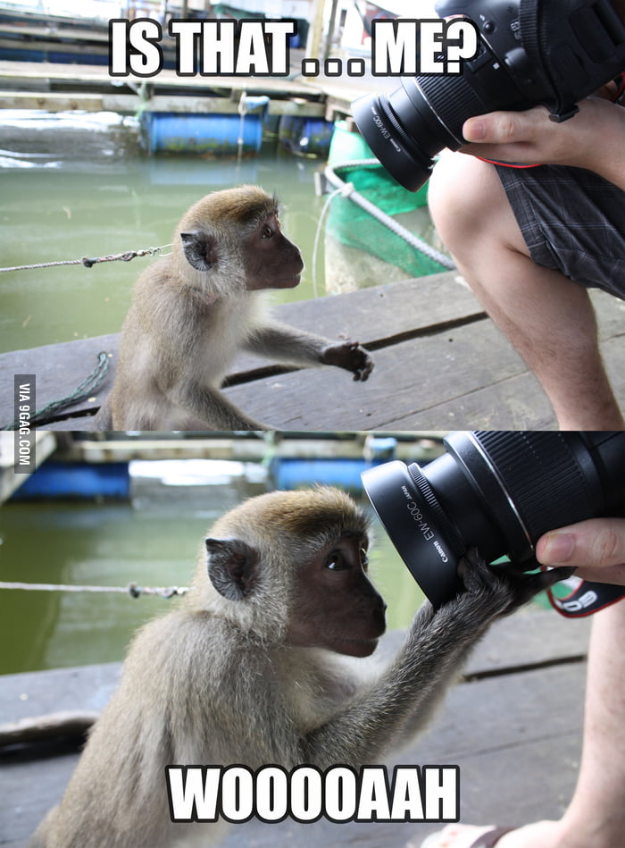 Monkey getting curious of himself.