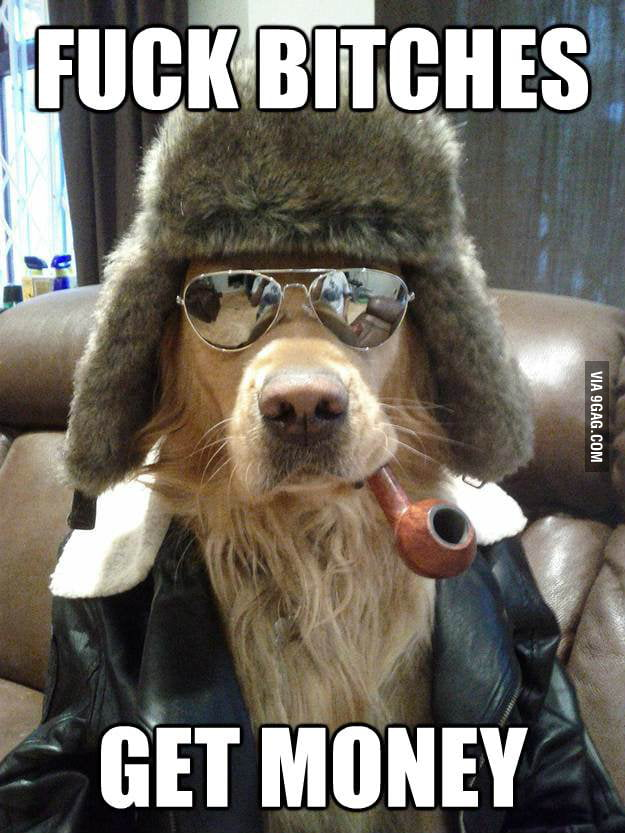 Life of a breeding dog.