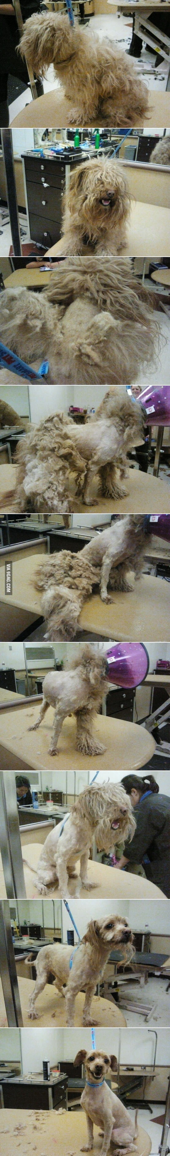 Grooming is important for man and woman, and dog!