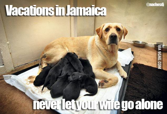 6146382_700b vacations in jamaica never let your wife go alone 9gag