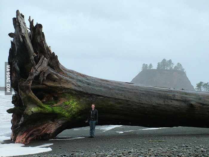 "Just a ""piece"" of driftwood washed up in Washington."