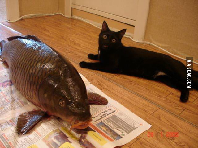 Cat! You said you wanted a fish!