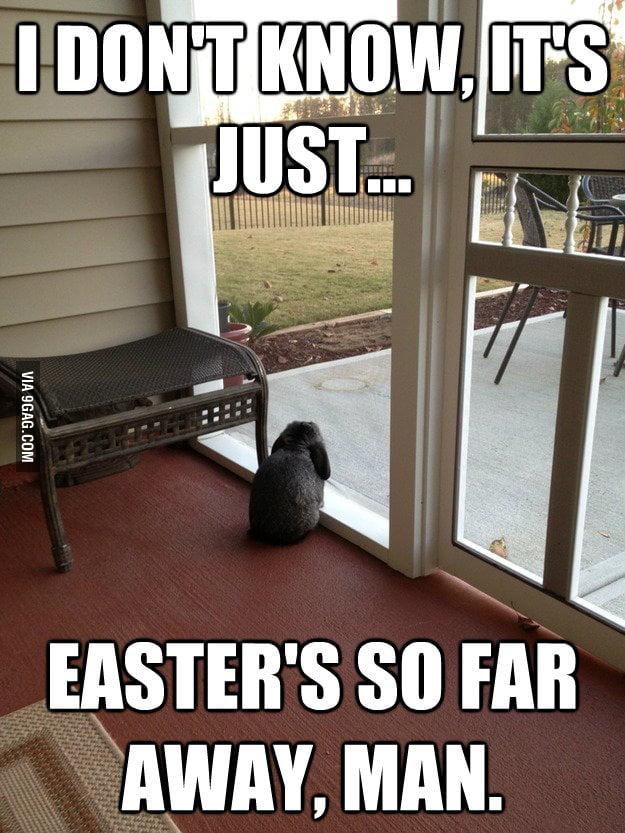 Facing Reality Bunny