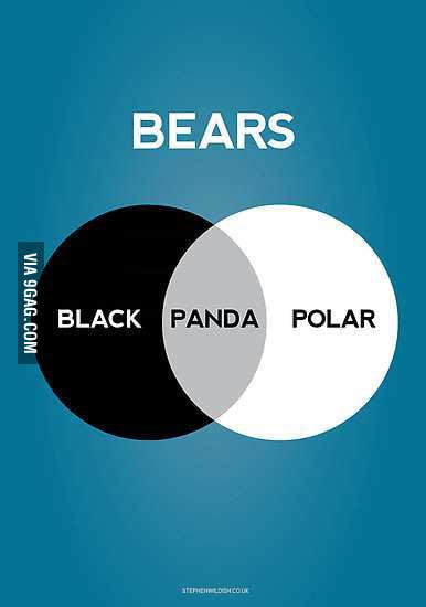Bears and stuff