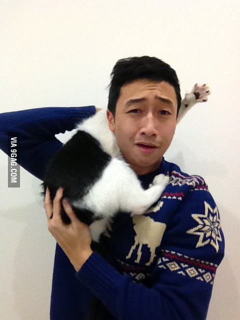 Trying to take Christmas picture with cat.