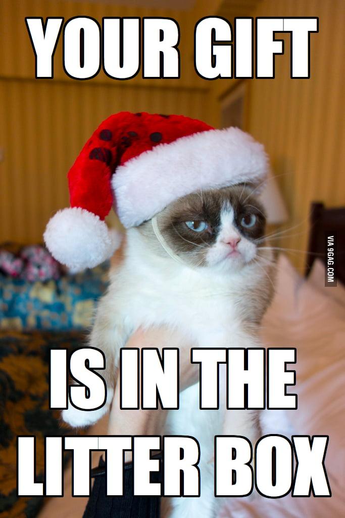 Grumpy cat shows her generosity.