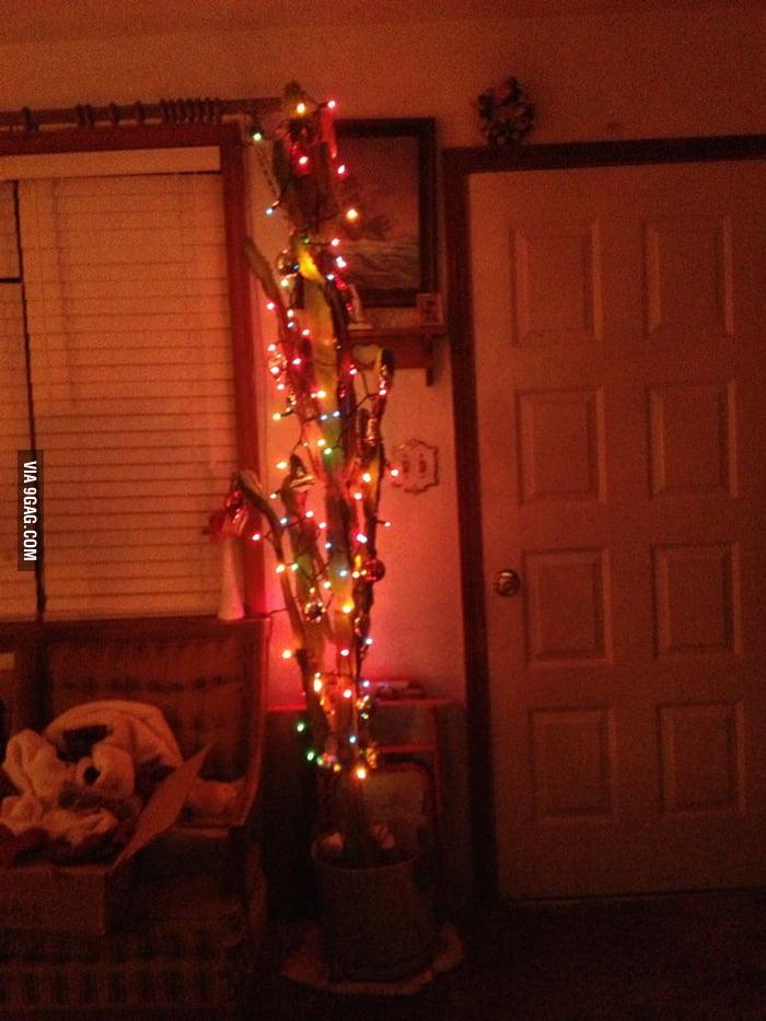 Christmas cactus!