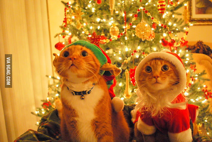 Christmas Cats.