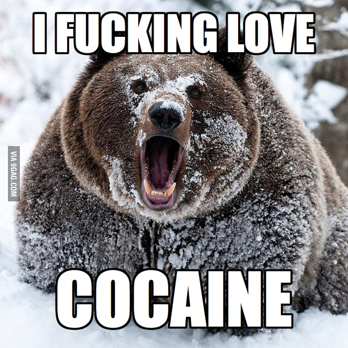 The Original Confession Bear