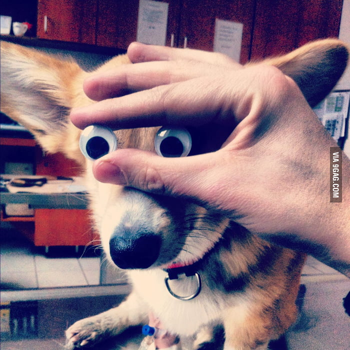 Everything is more fun with googly eyes