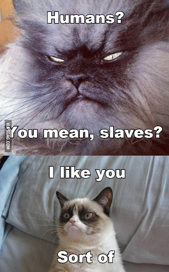 Sinister cat meets Grumpy cat