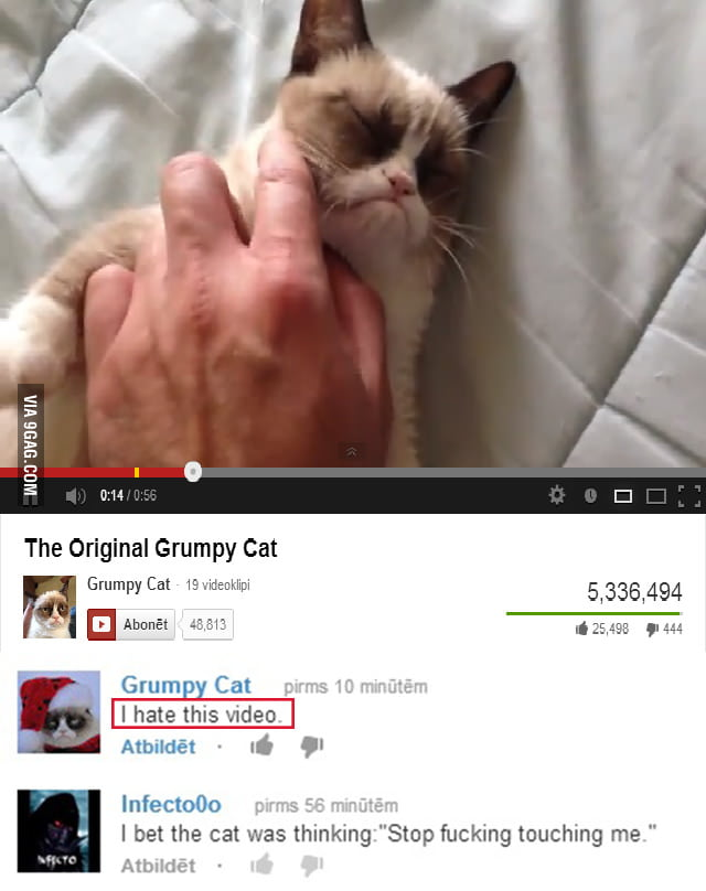 Grumpy cat HATES it