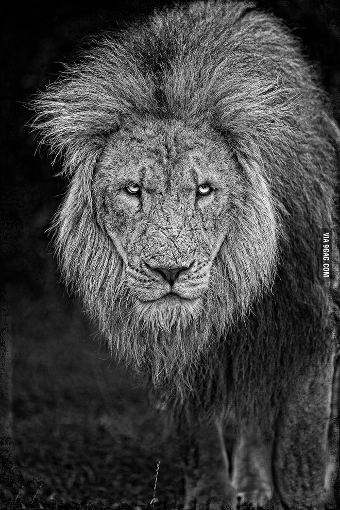 Retired King