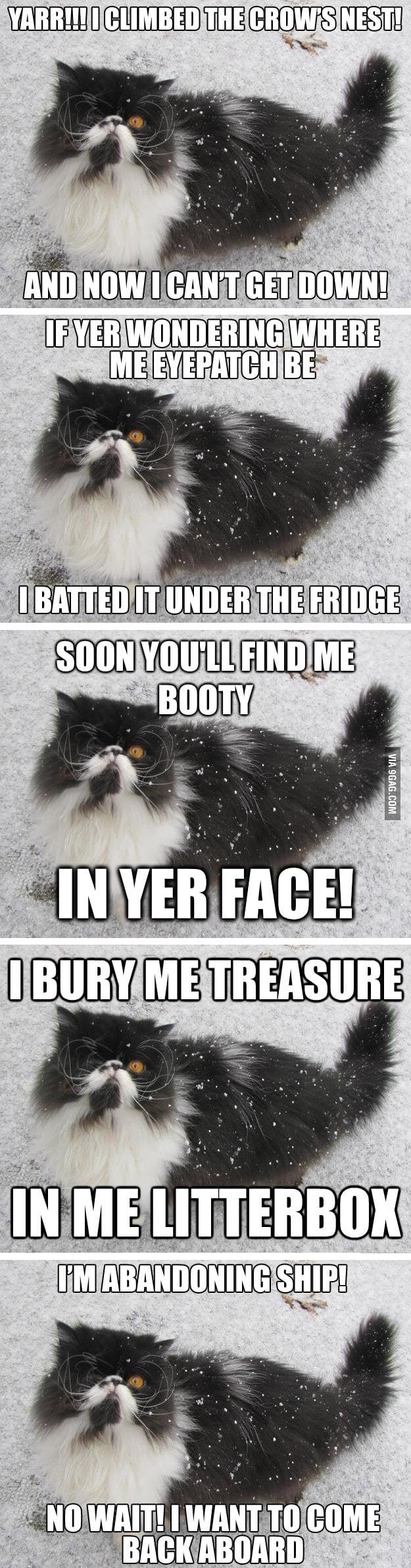 The best of Pirate Cat