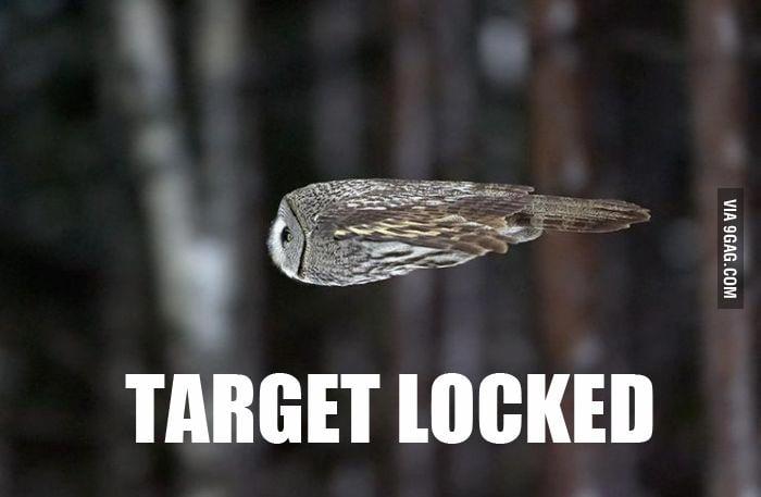 The Rocket Owl