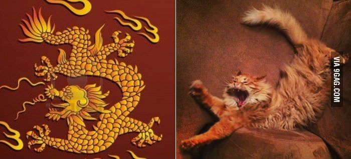 My cat is a Chinese dragon at heart.