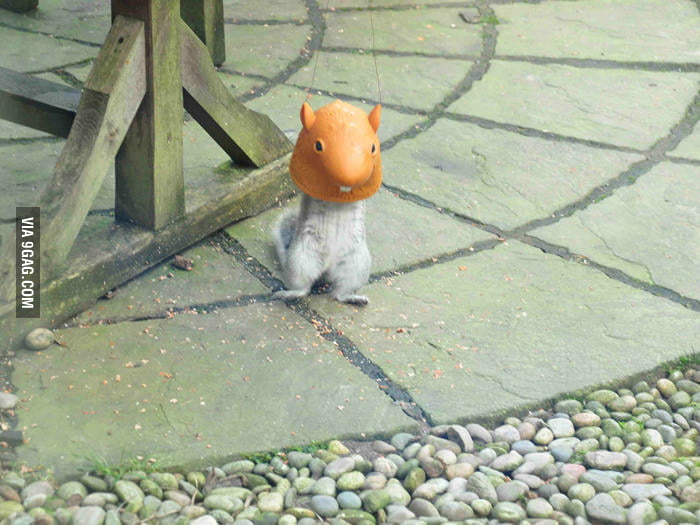 Day 12: Thanks to disguise, no one suspects I'm a squirrel.