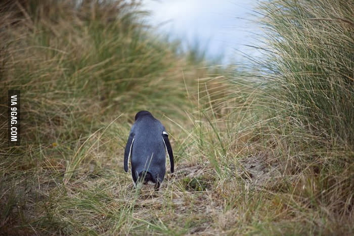 Sad penguin is sad.