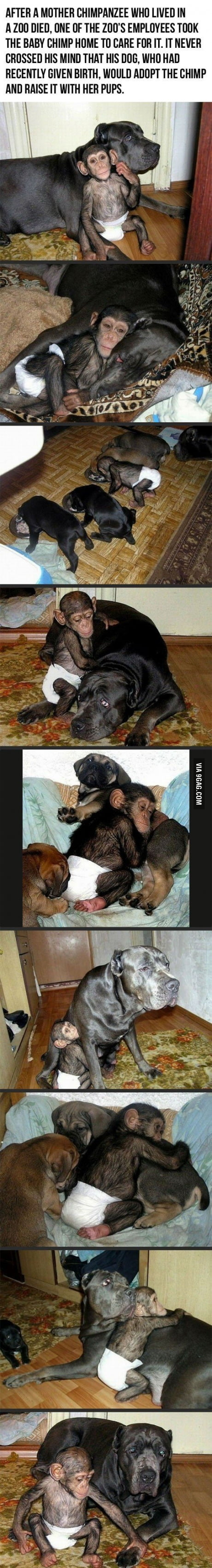 Parenting level: Dog
