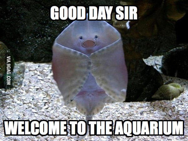 Welcome to the aquarium!
