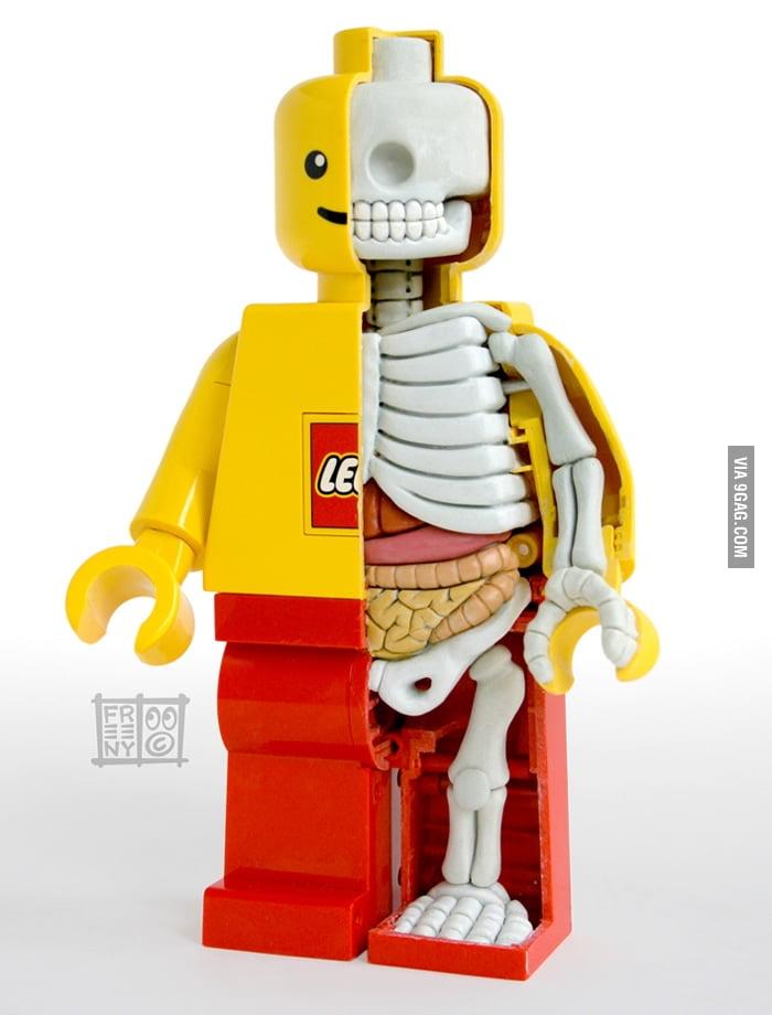 Lego anatomy