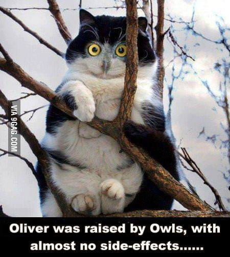 Oliver was raised by owls
