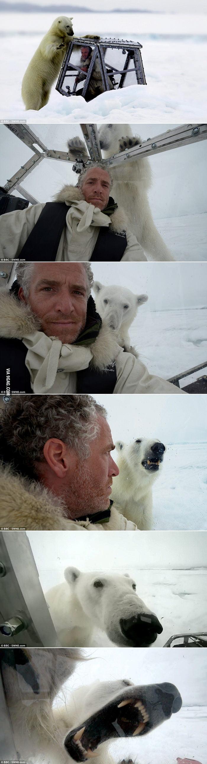 Polar bear is cute, right?