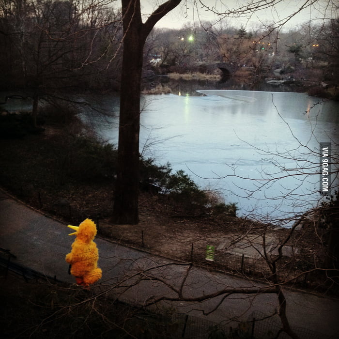 Spotted Big Bird jogging in Central Park