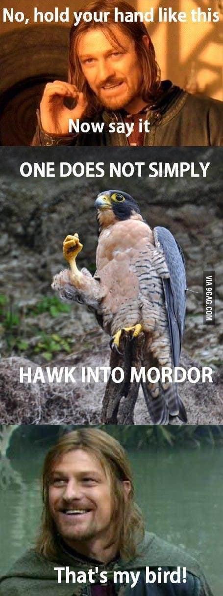 That's my bird