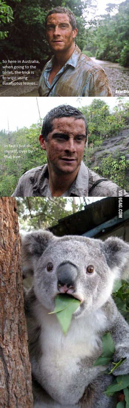 Bear Grylls In Australia