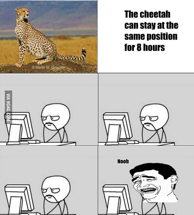Cheetah can stay at the same position for 8 hours..