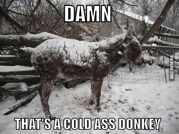 "People like ""Damn, that's a cold ass donkey"""