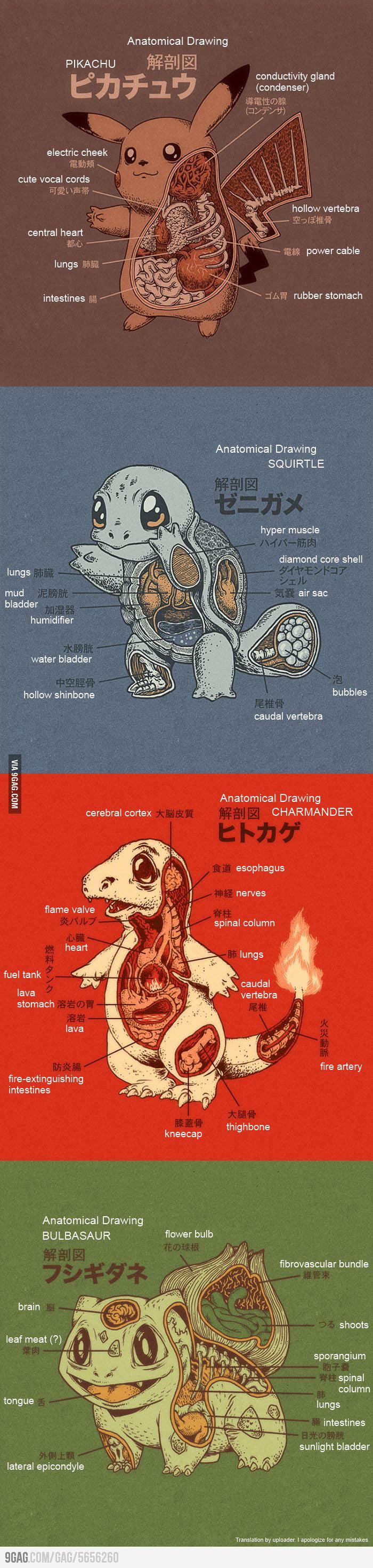 Pokemon Anatomy English Translation 9gag