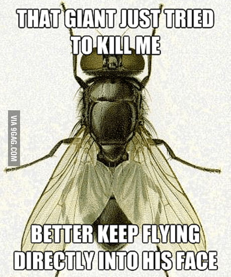 Flies logic