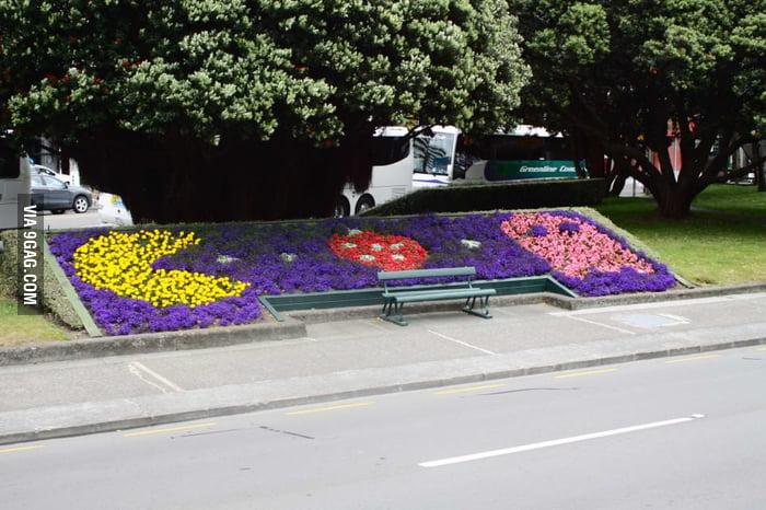 A garden in New Zealand.