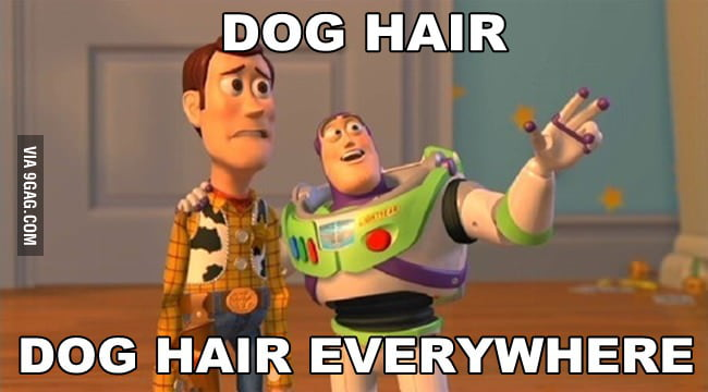 How I feel being a long haired dog owner
