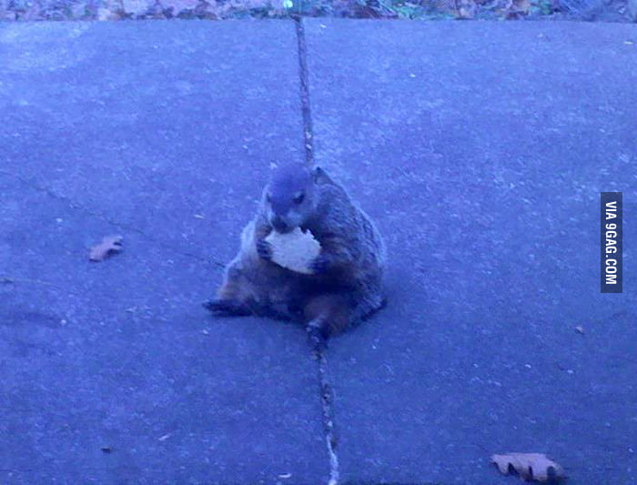 This is a really fat squirrel!